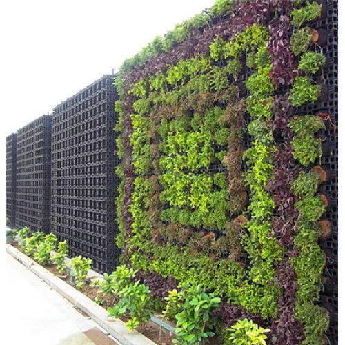 Vertical Garden Tanaman Berjuta Impian