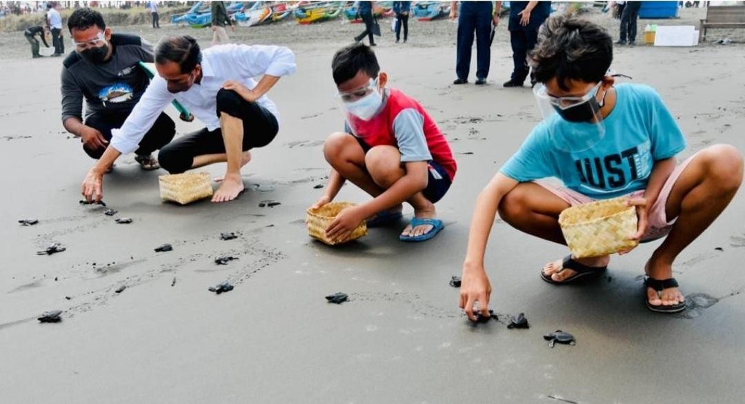 Lepas 1.500 Tukik di Cilacap, Presiden: Agar Tidak Punah